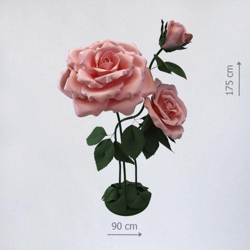 большой цветок роза