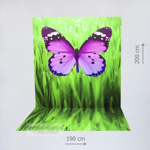 фотозона бабочка