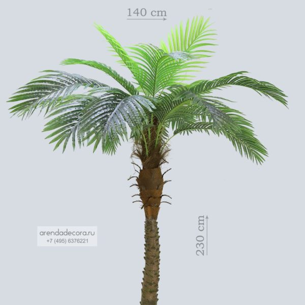 искусственная пальма в аренду